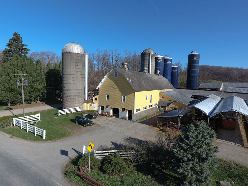 Local Dairy