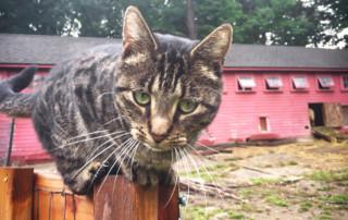 Chloe, Queen of the Barnyard