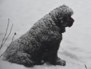 Dixie Enjoying the Snow
