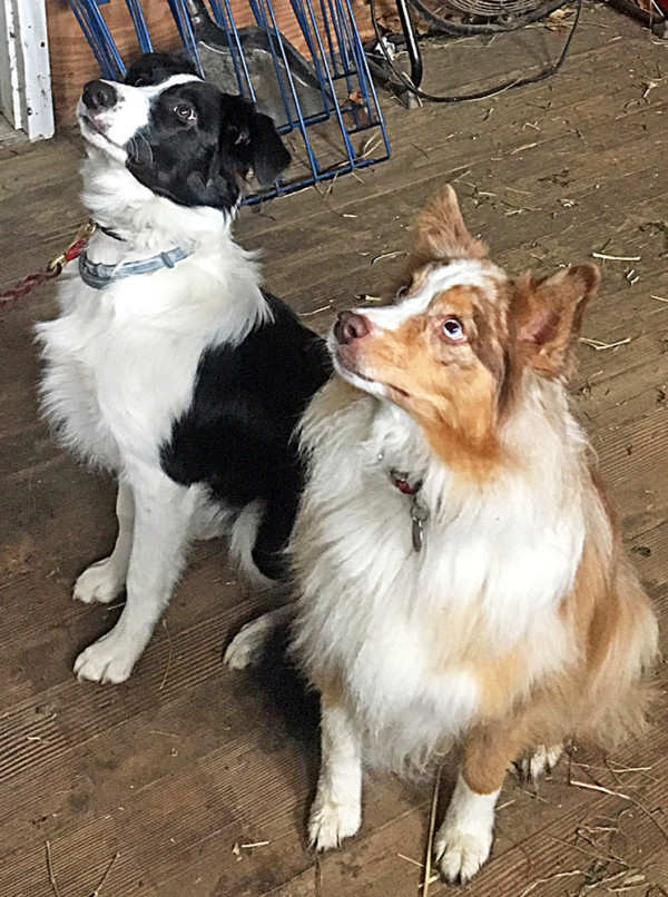 Oliver and Rosie at Attention