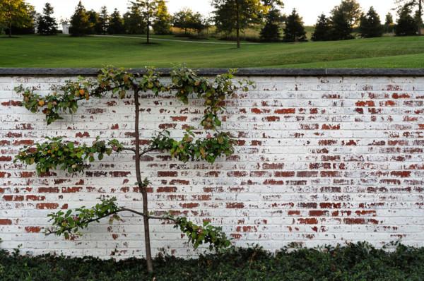 Landscape Wall