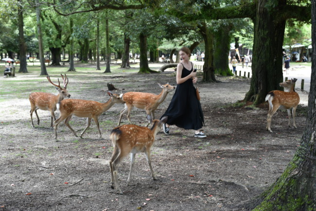 My Daughter Being Chased by Deer Outside Temple