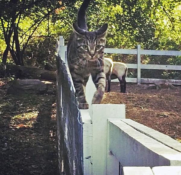 Chole on Fence