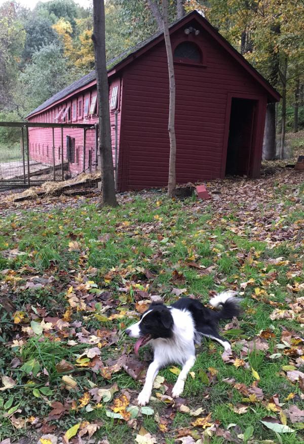 Oliver at Sheep Barn