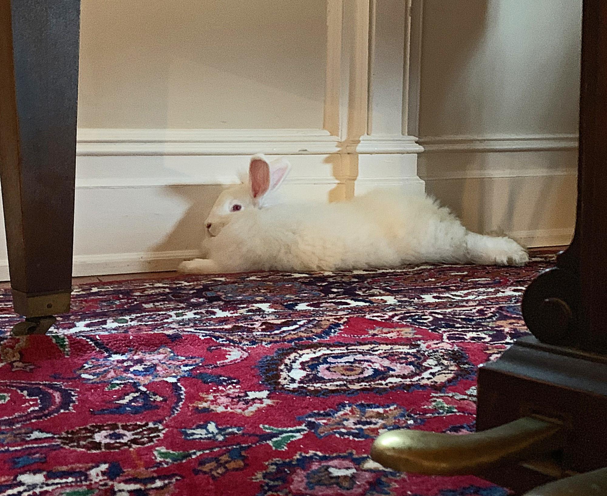 Bunny Under the Piano