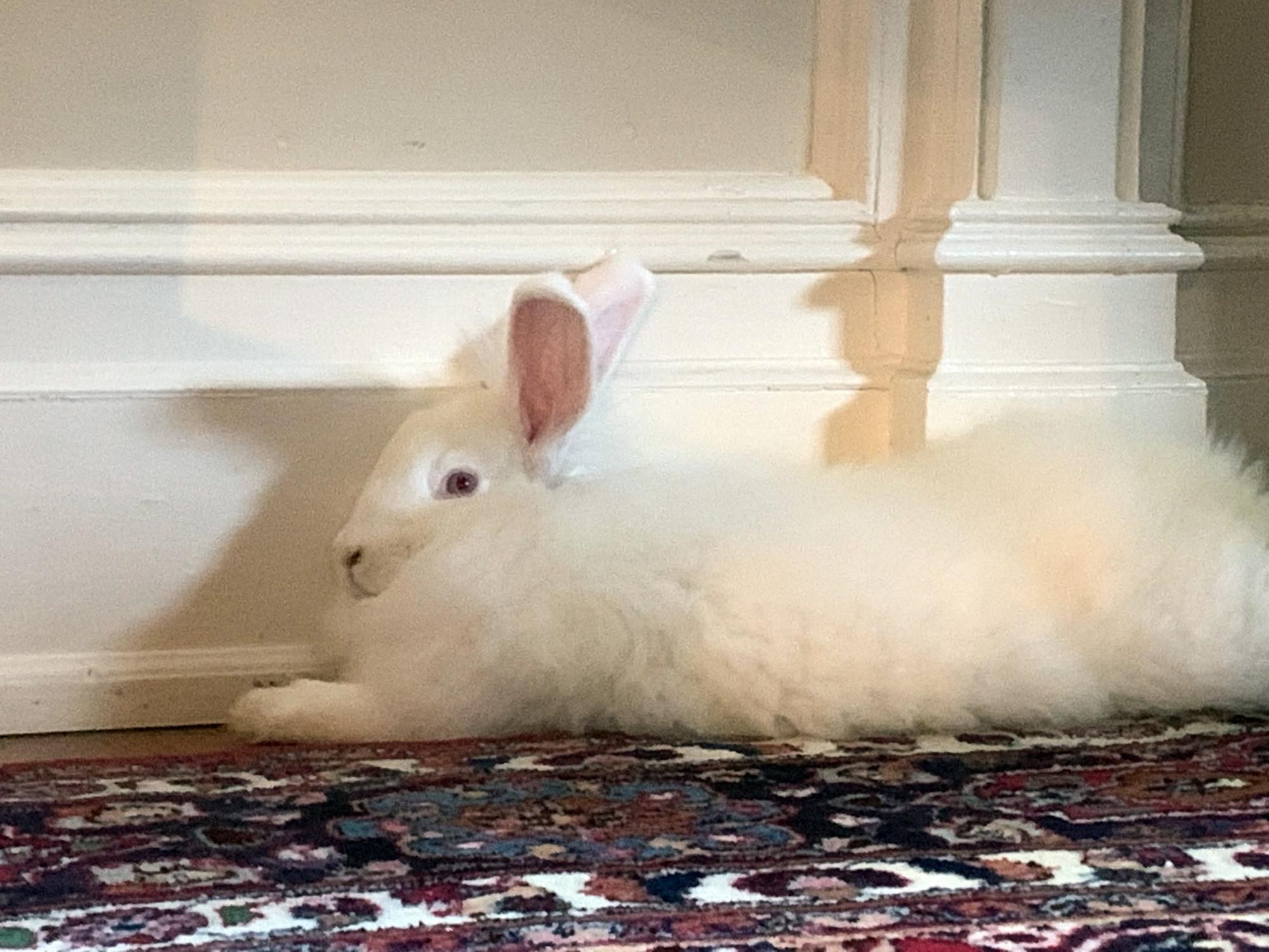 Bunny Close Up