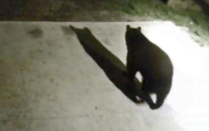 The Bear that Ate my Bird Feeders