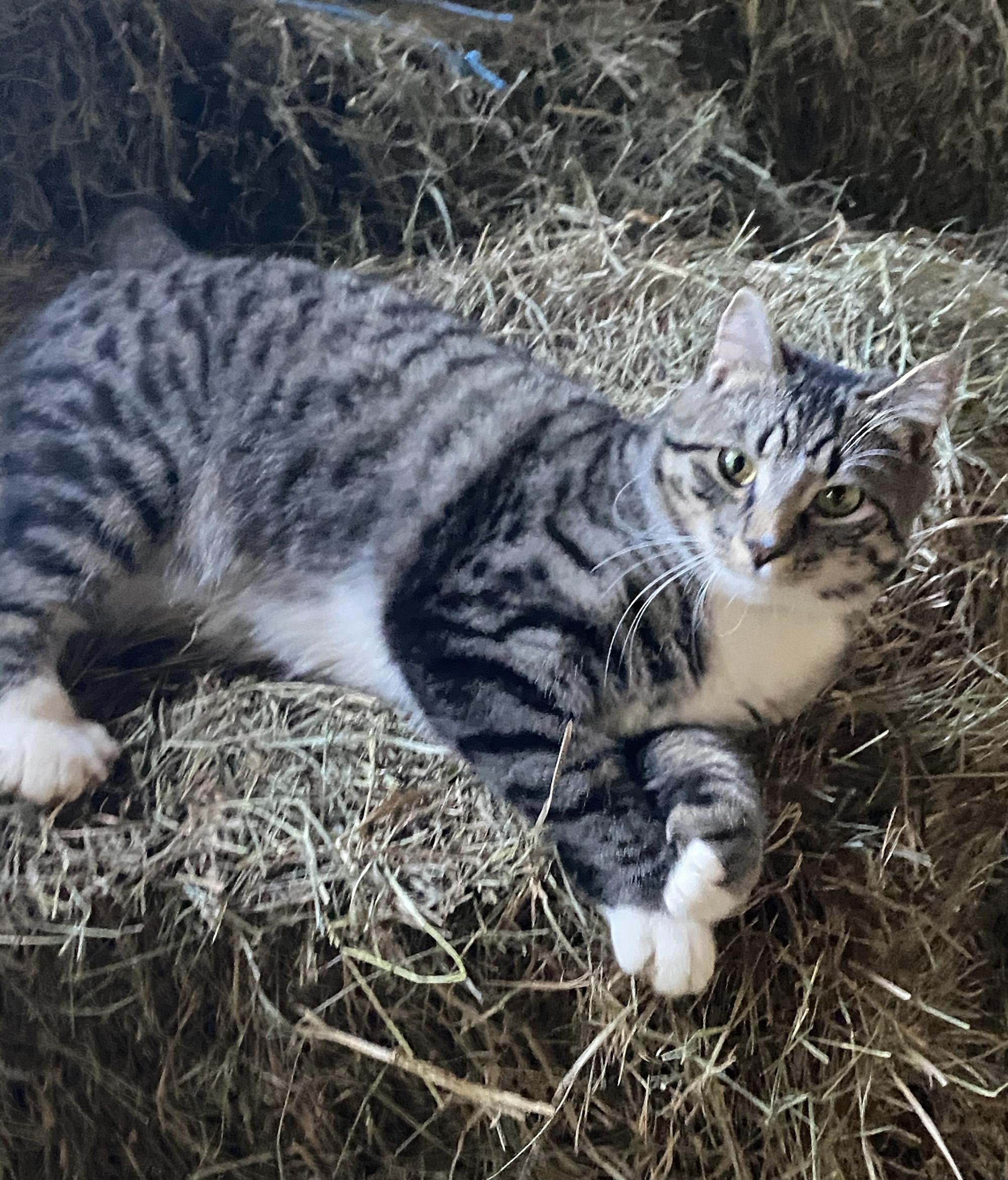 Poppy, Barn Cat in Training