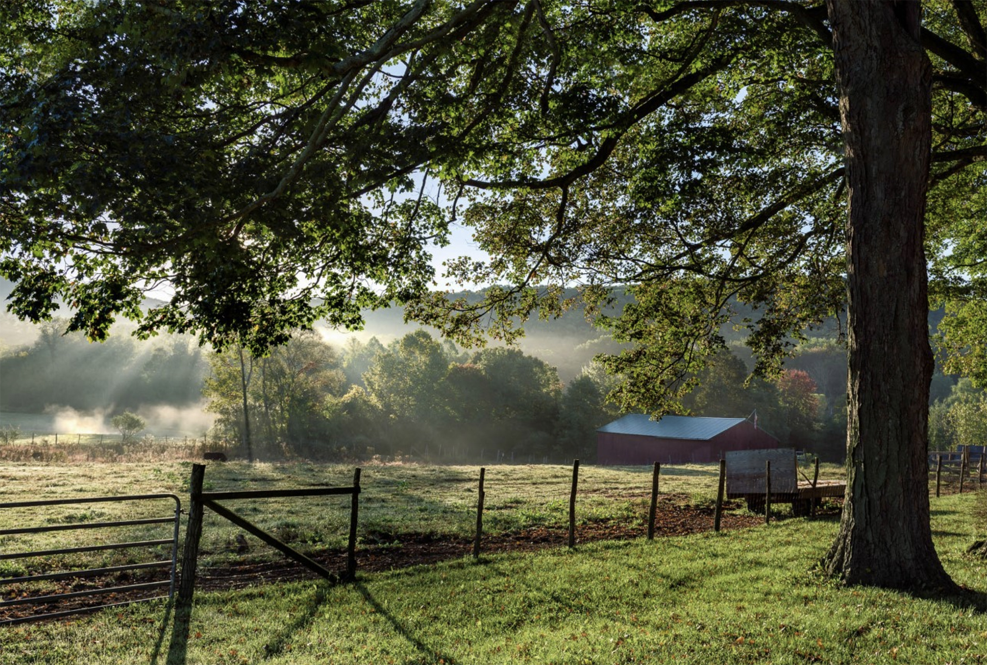 Family Farm in the Morning